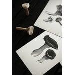 Teemu Järvi Illustrations Wild Mushroom mini poster set, 4 pcs