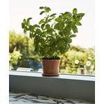 Hay Botanical Family pot, M, caramel