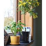 HAY Botanical Family ruukku ja lautanen, XL, antrasiitti