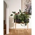 Design House Stockholm Botanic kasviteline