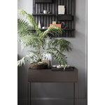 Ferm Living Plant Box tarjotin, musta messinki