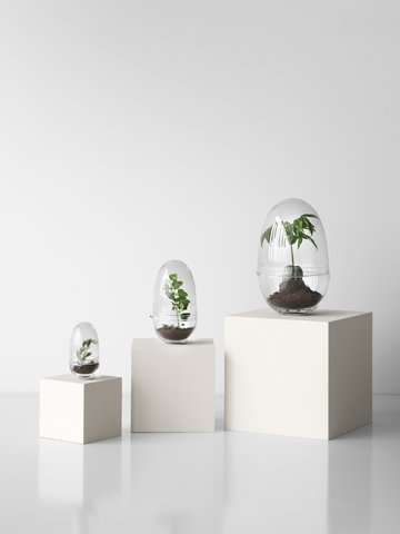 Viherkasvit Design House Stockholm Kirkas Lasi Björk