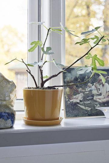 Viherkasvit Hay Keltainen Keramiikka