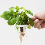 Plantui Smart Garden 6, valkoinen