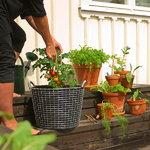 Korbo Planting Bag 24, 3 pcs