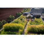 Gestalten Urban Farmers: The Now (and How) of Growing Food in the City