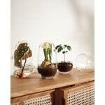 Design House Stockholm Grow mini greenhouse, M