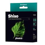 Plantui Shiso