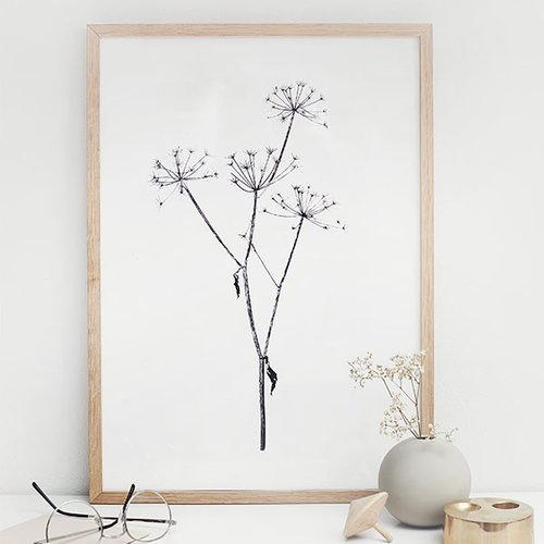 RK Design September Flowers #5 juliste