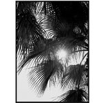 Palm Trees juliste
