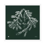 Teemu Järvi Illustrations Spruce Branch poster, 50 x 50 cm, forest green