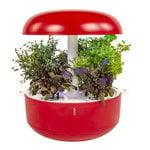 Smart Garden 6, punainen
