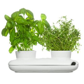 Sagaform Vaso doppio per erbe Hold