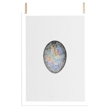 Paper Collective Translucent Egg juliste