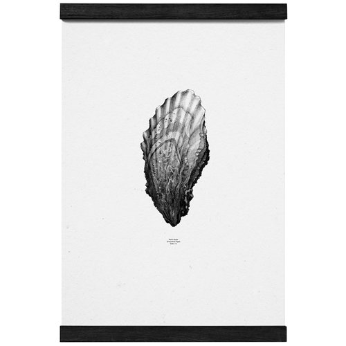 Paper Collective Nature 1:1 Oyster poster, white