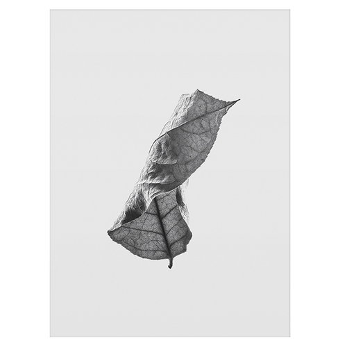 Paper Collective Floating Leaves 01