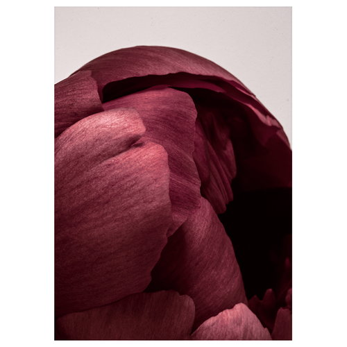 Paper Collective Peonia 01 poster