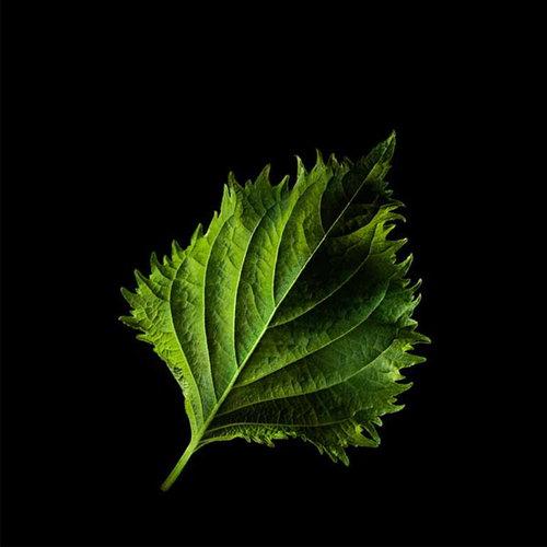 Plantui Shisolehti vihreä