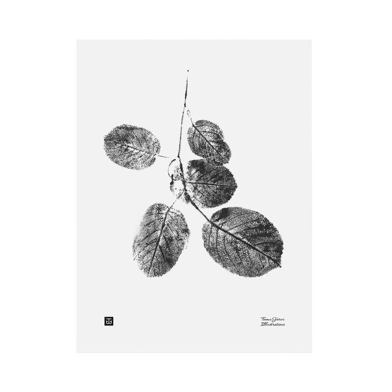 Teemu Järvi Illustrations Goat willow poster, 30 x 40 cm