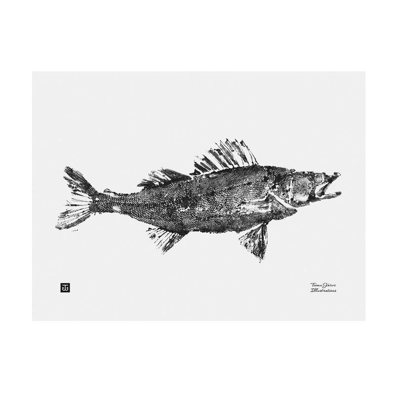 Teemu Järvi Illustrations Zander poster, 40 x 30 cm