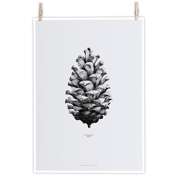 Paper Collective Nature 1:1 Pine Cone poster, grey