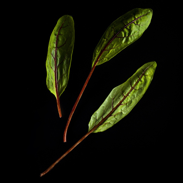 Plantui Acetosella