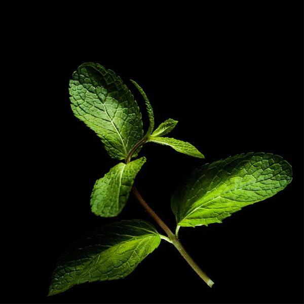Plantui Mint