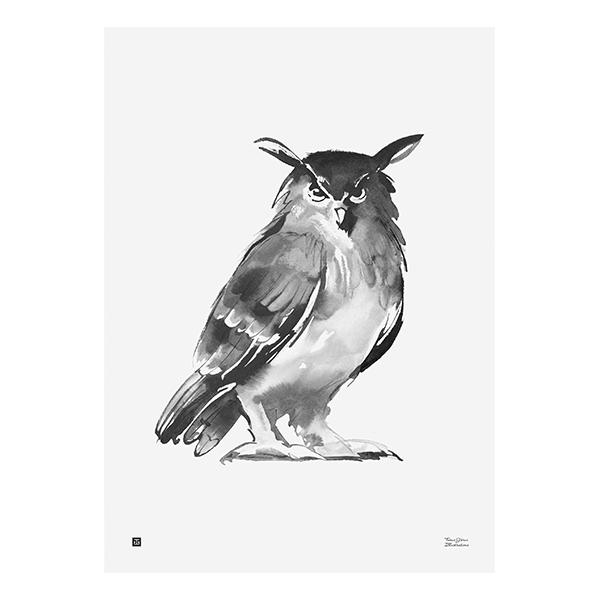 Teemu Järvi Illustrations Pöllö juliste, 50 x 70 cm